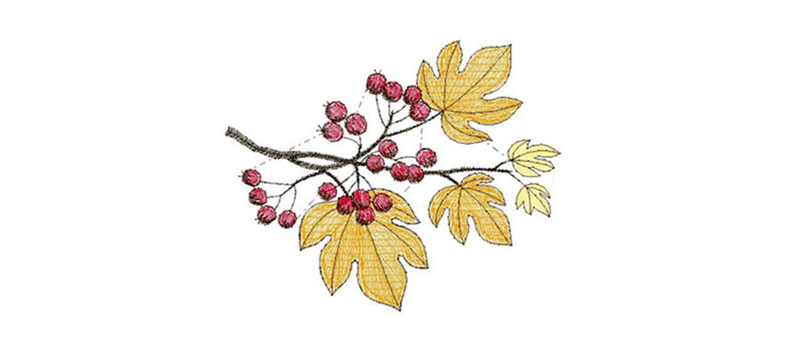Ricamo con foglie autunnali